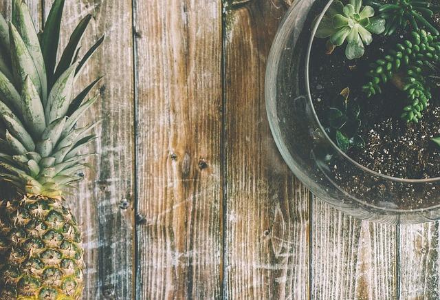 Costruire il proprio terrario: istruzioni per un terrario tropicale