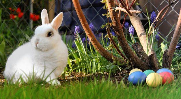 Coniglio: tutto su nidificazione