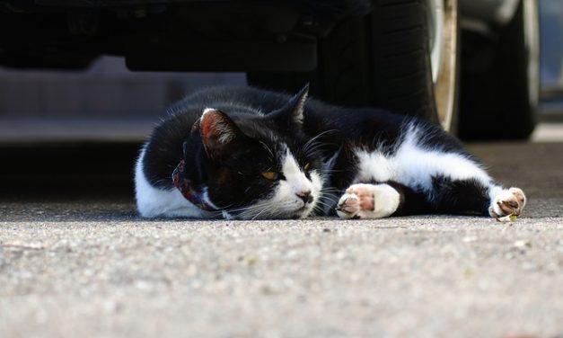 Cucina per gatti: ricetta per cibo fatto in casa