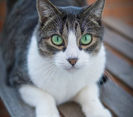 Nutrizione per i gattini di 8 settimane: è bene ricordarlo quando si nutrono i gattini