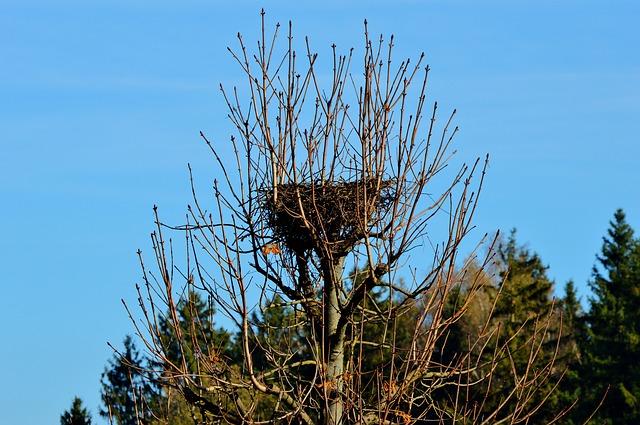 Costruire i propri nidi