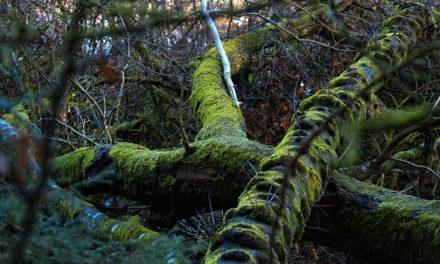 Uccidere radici albero: come funziona