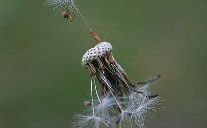 Ragno pettine: come tenerli adatti alle specie