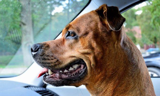 Chattering denti: cosa c'è di sbagliato con il mio cane?