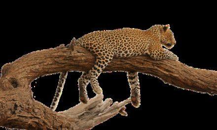 Costruire il proprio albero di gatto resistente alle intemperie: una guida