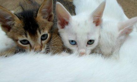 Gatto bambino non beve – in modo da prendersi cura dell'animale domestico