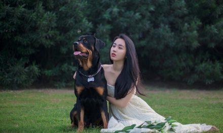 Havaneser-Mix: come prendersi cura della pelliccia dei cani a pelo lungo