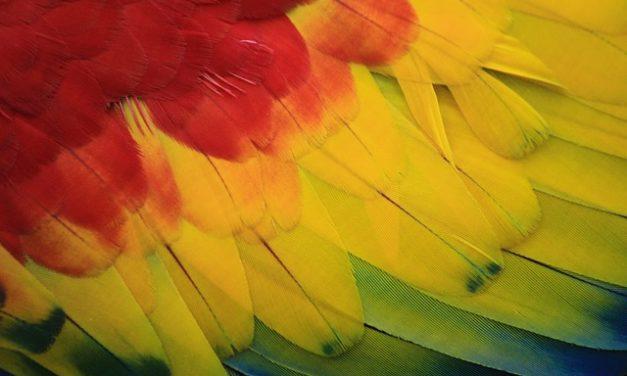 Parlare specie di pappagallo: Panoramica