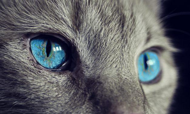 Feltro di pelliccia di gatto: come sbozzarlo delicatamente ma efficacemente