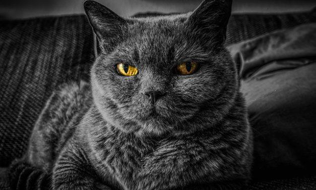 Occhi nero-bianco trucco