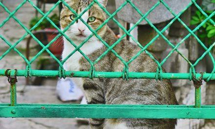 Recinzione elettrica per gatti: vantaggi e svantaggi
