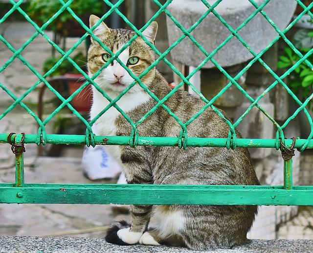 Recinzione elettrica per gatti vantaggi e svantaggi for Recinzione elettrica per cavalli
