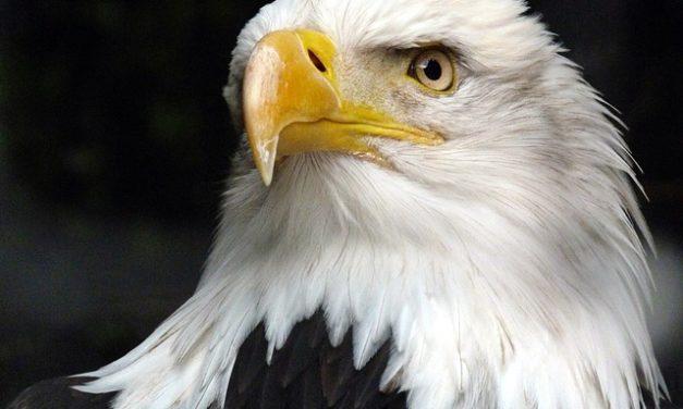 Uccello ferito: cosa fare con gli uccelli selvatici?