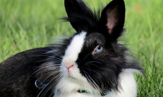 Costruire la propria casa per i conigli: come costruire un dormitorio di legno
