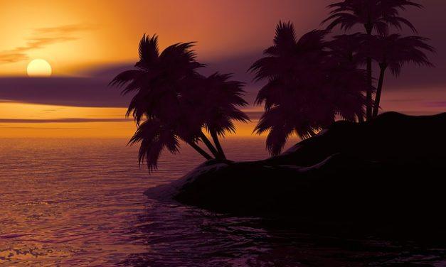 Cura della palma hawaiana: ecco come funziona