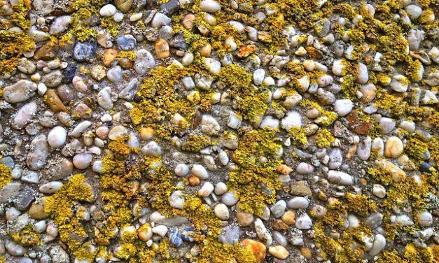Le alghe blu-verdi sono velenose: cosa fare in caso di avvelenamento?