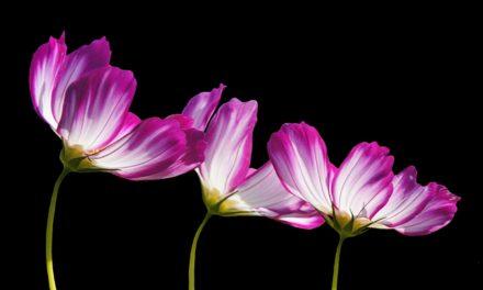 Piantare fiori in luglio: consigli