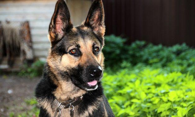 Prova della competenza del vostro cane in NRW: allenatevi online come segue