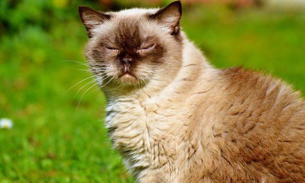 Rimozione dei capelli di gatto dai vestiti: ecco come funziona