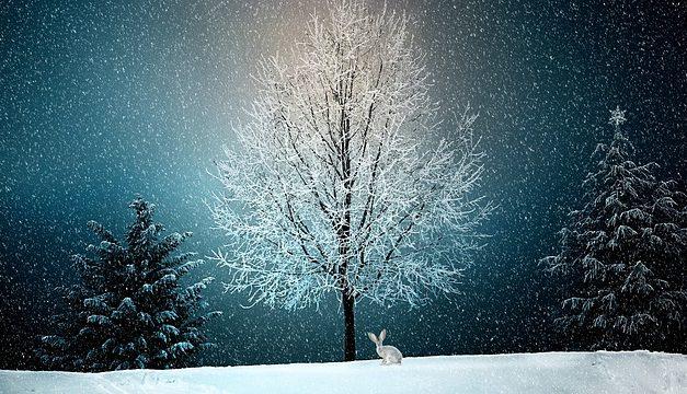 Mantenere il coniglio all'aperto in inverno: come proteggerlo