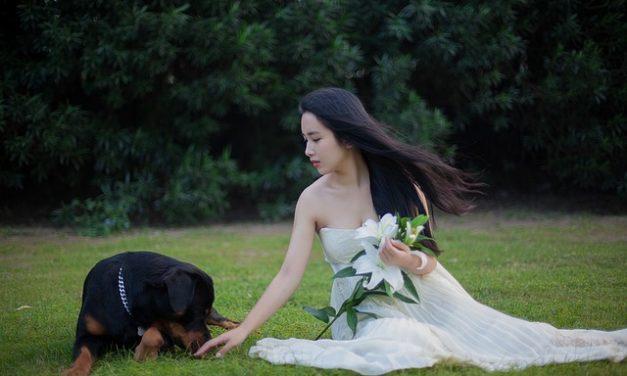 Sedia a rotelle per cani: come usare correttamente il cane