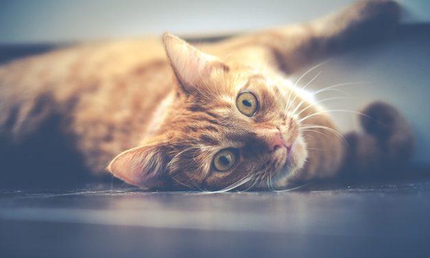 """""""Gatto morde mio figlio"""": guida amorevole all'assuefazione"""