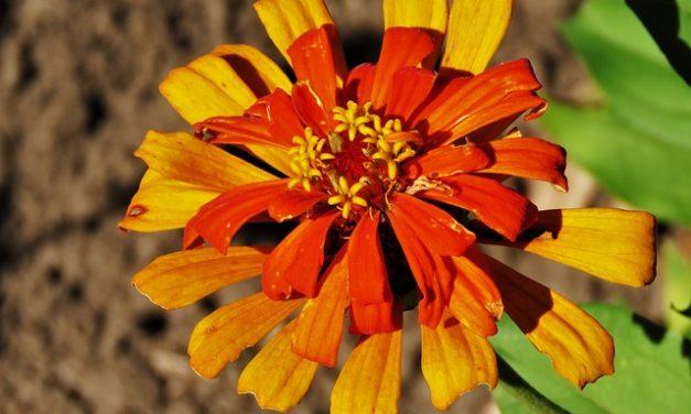 Realizzare da soli decorazioni da giardino arrugginite