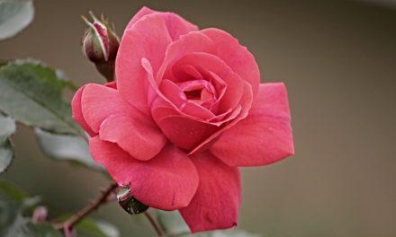 """""""Che colore corrisponde al rosa""""? Come combinare con gusto"""