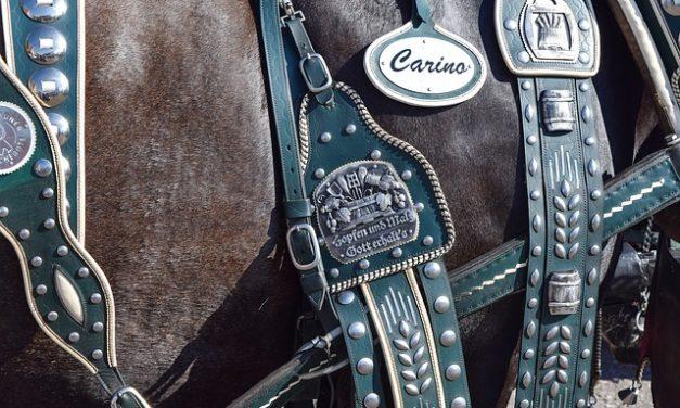 Fare biscotti al cavallo: Ricetta