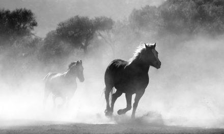 Imparare a galoppo: come addestrare il cavallo