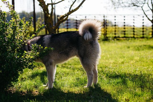 Recinzione elettrica per cani come evitare che il tuo for Recinzione elettrica per cavalli