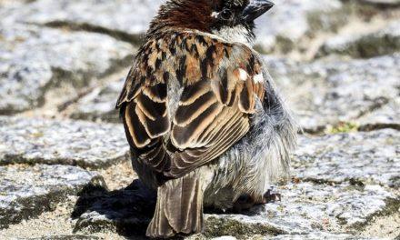 Diventare allevatore di uccelli: valori riproduttivi notevoli
