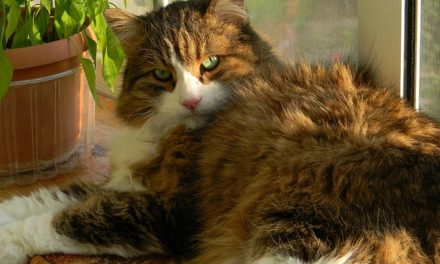 Gatto respira rapidamente: in calore puoi aiutare il tuo animale a respirare rapidamente.