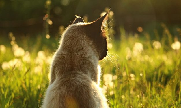 Il gatto ha un mal di denti: cosa fare?