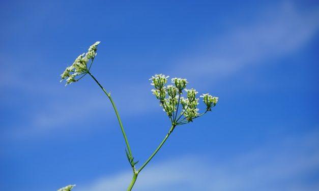 Piantatura di lumache a base di erbe: ecco come funziona