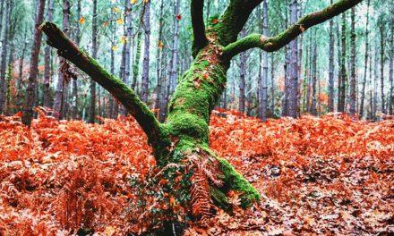Affittare una foresta: ecco come funziona