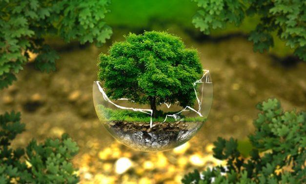 Alberi a crescita rapida: è così che potete piantare il vostro giardino