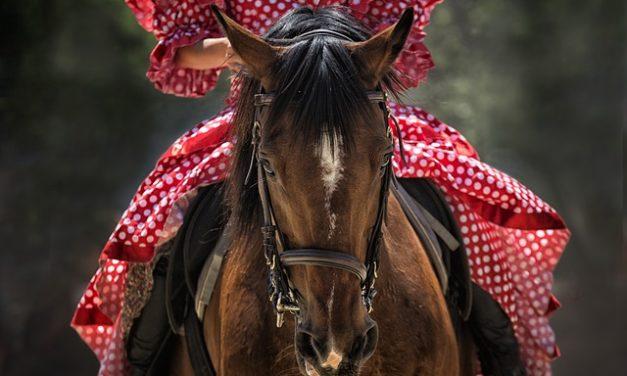 Costi di partecipazione all'equitazione: si segnalano i seguenti punti