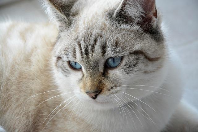 Gatti per smettere di piangere: ecco come si può procedere