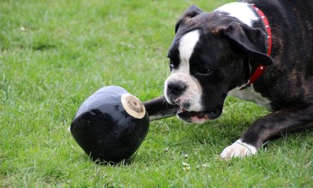 Hundetricks: Istruzioni per la danza dei cani