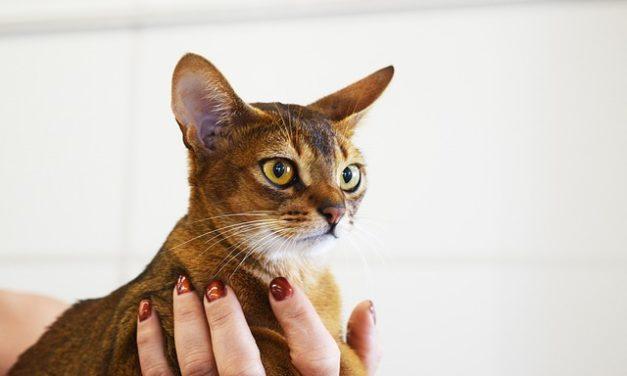 Tenia gatto: Informativa