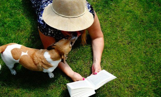 Cani lupo: aiutare gli animali in difficoltà con una casa di accoglienza
