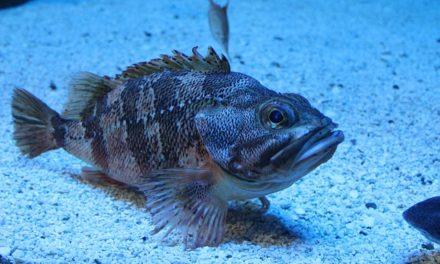 Pulizia corretta ed efficace della ghiaia dell'acquario: ecco come funziona
