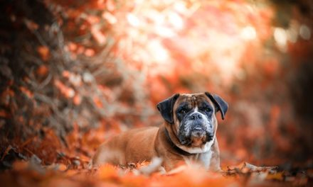 Cane di famiglia: come trovare un cane di famiglia