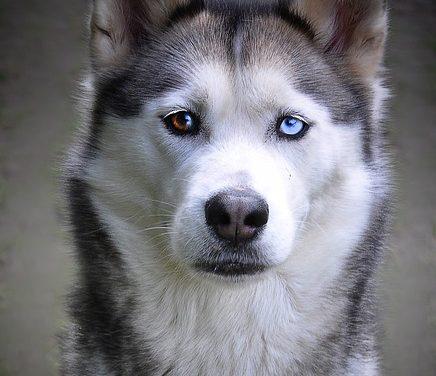 Freddo comune nei cani: un rimedio domestico