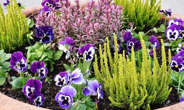 Giardini svedesi: come progettare il vostro giardino in stile scandinavo
