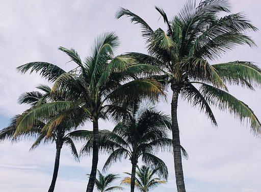 Yucca Palme: come coltivare talee