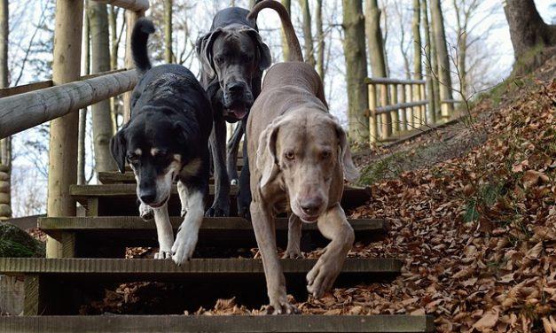 Cani a portata di mano: ecco come si fa la consegna per l'animale perfetto