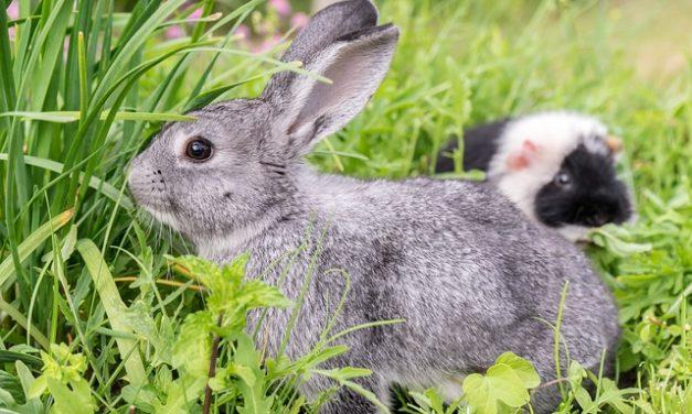 Coniglietto in giardino: cosa fare?