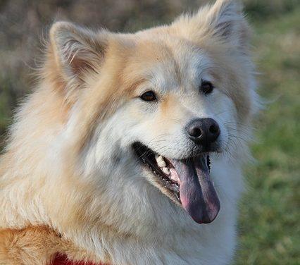 Razze di cani non complicate: come trovare il tuo migliore amico
